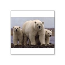 "Cute Arctic Square Sticker 3"" x 3"""