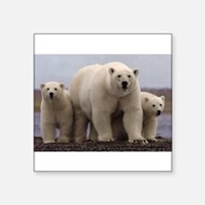 "Cute Arctic Square Sticker 3"" x 3"""