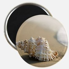 SEASHELL Magnets