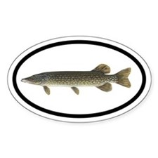 Pike Fishing Oval Decal