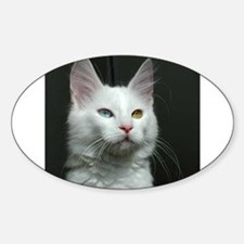 turkish angora two colored eyes white Decal