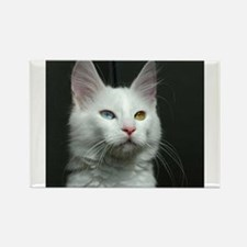 turkish angora two colored eyes white Magnets