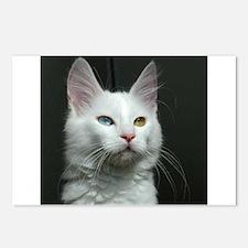 turkish angora two colored eyes white Postcards (P