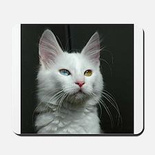 turkish angora two colored eyes white Mousepad