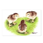 Silver Grey Dorking Chicks Postcards (Package of 8