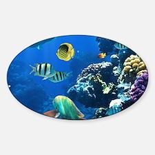 Sea Life Decal