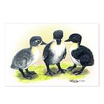 Swedish Duck Ducklings Postcards (Package of 8)