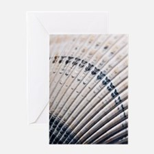 Blue And White Seashell Card Greeting Cards