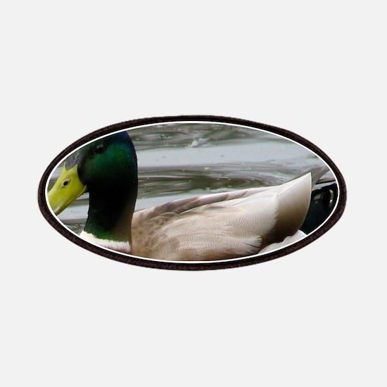 Mallard Duck On Scudder Pond Patch