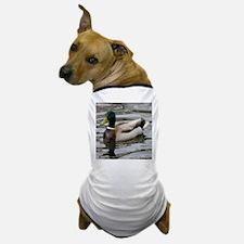 Mallard Duck On Scudder Pond Dog T-Shirt