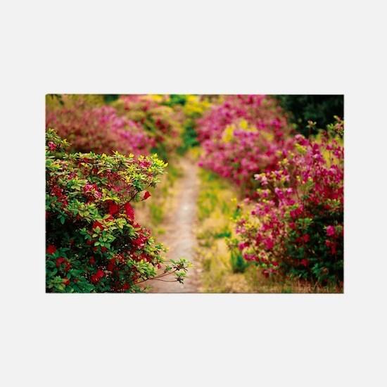 Footpath with azaleas Magnets