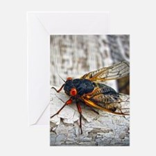 Red Eyed Cicada Greeting Cards