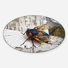 Red Eyed Cicada Decal