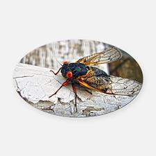 Red Eyed Cicada Oval Car Magnet