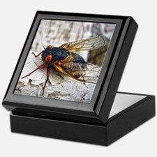 Red Eyed Cicada Keepsake Box