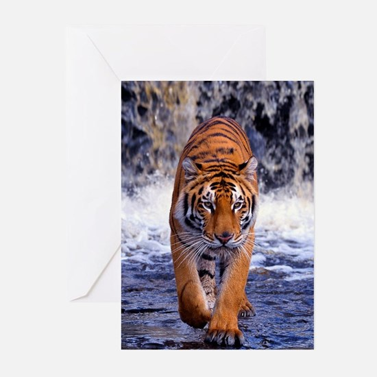 Tiger In Waterfall Greeting Cards