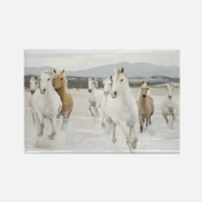 Horses Running On The Beach Magnets