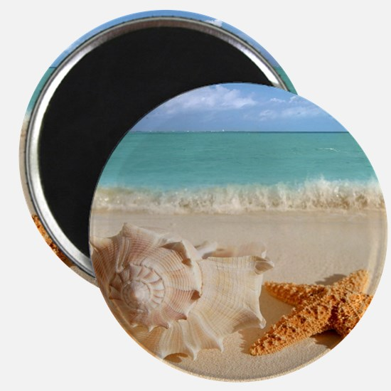 Seashell And Starfish On Beach Magnets