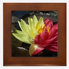 Lotus Flower Framed Tile