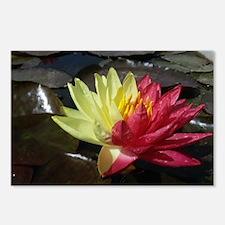 Lotus Flower Postcards (Package of 8)