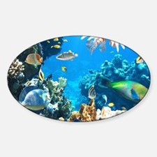 Tropical Fish Decal