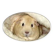 guinea pig Oval Decal