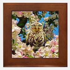 Owl in Blossom Framed Tile