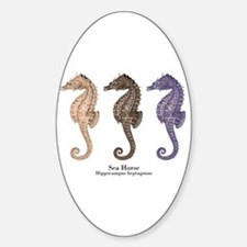 Sea Horse Vintage Art Oval Decal
