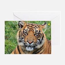 Funny Sumatran tiger Greeting Card