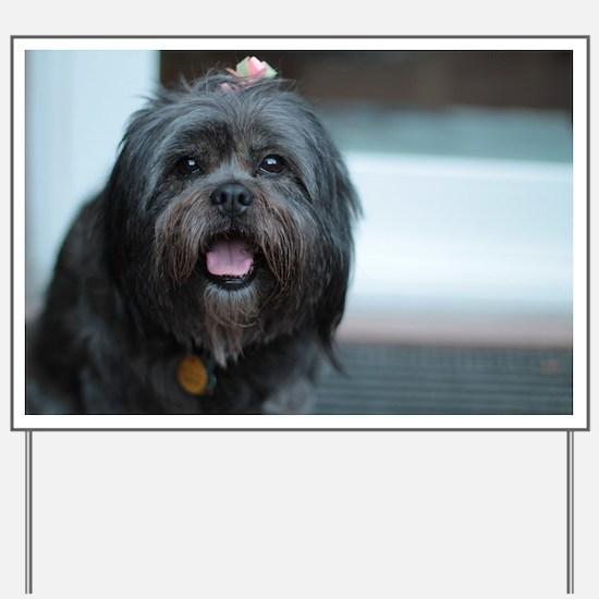 smiling lhasa type dog Yard Sign