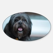 smiling lhasa type dog Decal