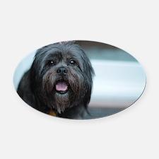 smiling lhasa type dog Oval Car Magnet