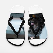smiling lhasa type dog Flip Flops