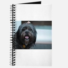 smiling lhasa type dog Journal