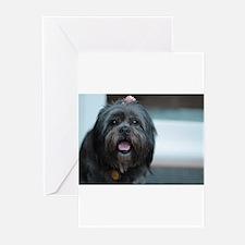 smiling lhasa type dog Greeting Cards