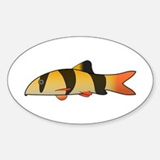 Clown Loach Decal