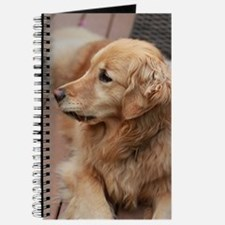 golden retriever serious Journal