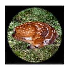 Fawn in Ferns Tile Coaster