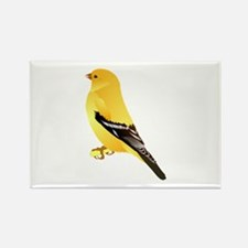 Gold finch Magnets