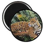 Jaguar on Branch Magnet