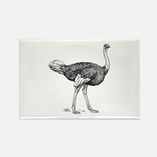 Ostrich Magnets