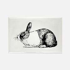 Holland rabbit Magnets