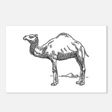 Dromedary Postcards (Package of 8)