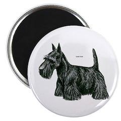 Scottish Terrier Dog 2.25
