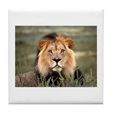 Male African lion Tile Coaster
