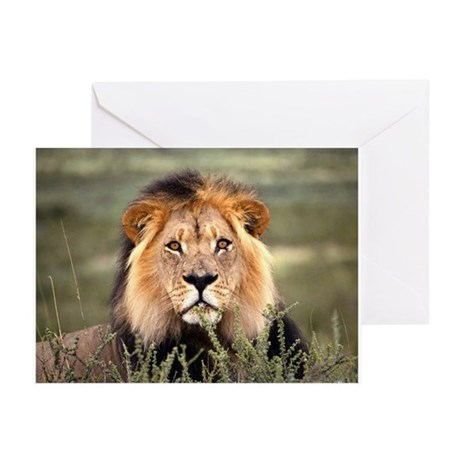 Male African lion Greeting Cards (Pk of 10)