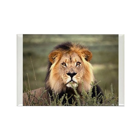 Male African lion Rectangle Magnet (10 pack)