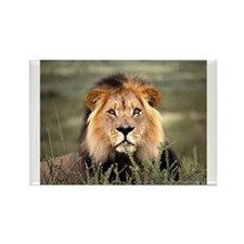 Male African lion Rectangle Magnet