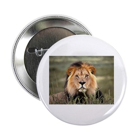 "Male African lion 2.25"" Button (10 pack)"