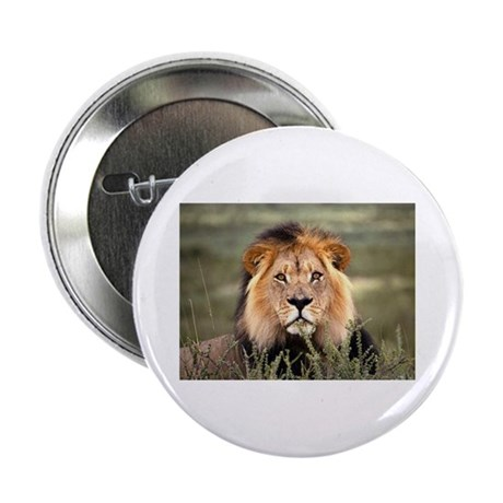 Male African lion Button